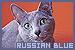 catsrussianblue