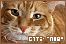 catstabby