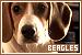 dogsbeagles