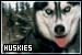 dogshuskies