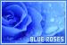 rosesblue